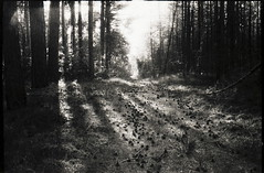 (no49_pierre) Tags: monochrome blackandwhite forestscape rangefinder evening may
