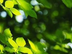 Dziki-ogród Unser-wilder-Garten  Our-savage-garden (arjuna_zbycho) Tags: badenbeiwien kurstadt luftkurort austria stadt city miasto thermenregion biosphaerenpark niederösterreich österreich rakousko wienerwald doblhoffpark rosengarten dzikiogród unserwildergarten oursavagegarden naszdzikiogród natur