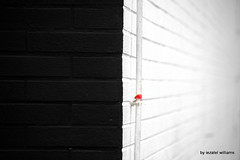 Minimal vision 1 by iezalel williams IMG_1441-002 (iezalel7williams) Tags: duality beautiful black white red wall closeup abstract angle canoneos700d photo street photography light love thinkpositive thankyou
