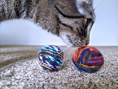 Project 365 - 6/19/2019 - 170/365 (cathy.scola) Tags: project365 odc cat toys yarn