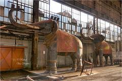 Bons baisers de la famille Dumbo (URBEX PASSION PHOTOS) Tags: bons baisers de la famille dumbo france juin 2019 roberturbex eléphant eléphants canon eos 5d