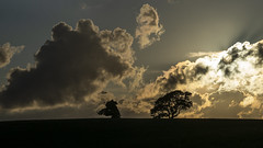 Trees and Clouds at Sunset (stevedewey2000) Tags: devon sunset silhouette trees treescape cloudscape clouds landscape sony70400g 169 totnes berrypomeroy