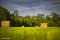 Hay bale play (domingo4640) Tags: agriculture champ paille landes basarmagnac lefreche ambiance loxia loxia85 loxia2485 paysage paysagecampagne paysagebuccolique campagne