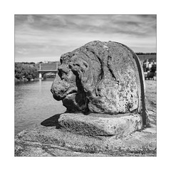 46 [titre tired lion] (Armin Fuchs) Tags: arminfuchs lavillelaplusdangereuse würzburg square anonymousvisitor thomaslistl wolfiwolf jazzinbaggies rivermain main lion alterkranen 35mm sculpture mainkai