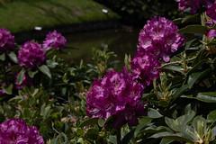 sheffield park and gardens-190527-29.jpg (Phil Mercer-Kelly) Tags: england sheffieldpark uk gardens mercerkelly eastsussex nationaltrust philmercer europe capabilitybrown