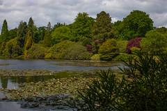 sheffield park and gardens-190527-33.jpg (Phil Mercer-Kelly) Tags: england sheffieldpark uk gardens mercerkelly eastsussex nationaltrust philmercer europe capabilitybrown