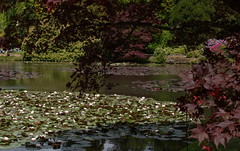 sheffield park and gardens-190527-37.jpg (Phil Mercer-Kelly) Tags: england sheffieldpark uk gardens mercerkelly eastsussex nationaltrust philmercer europe capabilitybrown