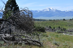 Ricco Ranch, Prairie City, Oregon (NRCS Oregon) Tags: usda naturalresourcesconservationservice oregon grant county ranching ranchers forest land juniper removal thinning prairie city agriculture conservation