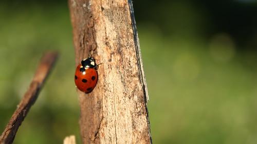 Ladybug ©  Егор Журавлёв