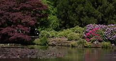 sheffield park and gardens-190527-43.jpg (Phil Mercer-Kelly) Tags: england sheffieldpark uk gardens mercerkelly eastsussex nationaltrust philmercer europe capabilitybrown