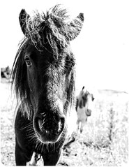 Horses and Ponies. (CWhatPhotos) Tags: cwhatphotos flickr photographs photograph pics pictures pic picture image images foto fotos photography artistic that have which contain near olympus camera micro four thirds horse pony ponies equine field summers day summer hot sigma 16mm f14 prime lens omd em1 mkl