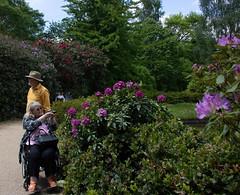sheffield park and gardens-190527-28.jpg (Phil Mercer-Kelly) Tags: england sheffieldpark uk gardens mercerkelly eastsussex nationaltrust philmercer europe capabilitybrown
