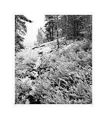 Back to the Winter (AStomatin) Tags: analog film monochrome bnw medium format standart lens bronica ilford delta snow