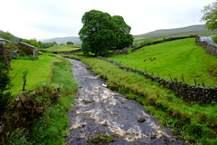 River Swale @ Thwaite.. (Adam Swaine) Tags: thwaite riverswale swaledale yorkshire northyorkshire thedales river rivers riverbank england english englishlandscapes englishrivers britain british uk ukcounties counties countryside trees fields village villages englishvillages waterside water rural stonewalls aonb