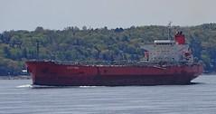 Platytera - IMO 9380099 (J. Trempe 3,960 K hits - Merci-Thanks) Tags: stefoy quebec canada ship navire fleuve river stlaurent stlawrence petrolier tanker platytera