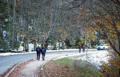 Autumn leaves @ Abant / Turkey (Engin Süzen) Tags: autumn abant turkey türkiye türkei nature natura allnatural forest olympus olympusem1markii olympusomdem1markii m43 m43turkiye landscape
