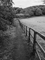 Paths and fences. . . (CWhatPhotos) Tags: pictures photography flickr foto image pics picture pic images photographs photograph fotos cwhatphotos street camera wood trees bw white black monochrome fence woodland that lens four prime mono wooden artistic near path walk f14 sigma olympus have chester le micro fenced 16mm which contain omd thirds em1 waldridge lane
