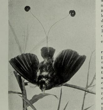 This image is taken from Page 517 of The living animals of the world : a popular natural history an interesting description of beasts, birds, fishes, reptiles, insects, etc., with authentic anecdotes