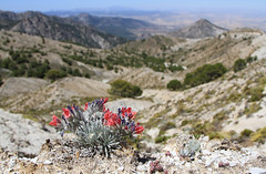 Sierra Nevada (Wild Chroma) Tags: granada sierranevada landscape echium mountains albicans echiumalbicans bugloss boraginales