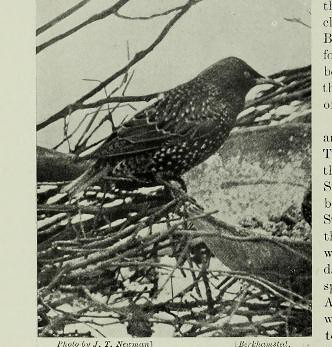 This image is taken from Page 520 of The living animals of the world : a popular natural history an interesting description of beasts, birds, fishes, reptiles, insects, etc., with authentic anecdotes