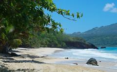 Solos en la playa (ben.bourdon) Tags: caribe dominicana república playa azul blanco sueño vegetación samaná las galeras