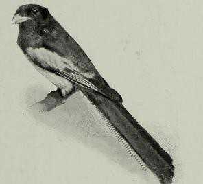 This image is taken from Page 509 of The living animals of the world : a popular natural history an interesting description of beasts, birds, fishes, reptiles, insects, etc., with authentic anecdotes