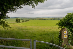 The path forks (Charles DP Miller) Tags: hampshire footpath england kingscleredowns places kingsclere newbury unitedkingdom