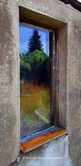 170/365 - Framed... (Sinuhé Bravo Photography) Tags: canon eos7dmarkii reflection window windowwednesday old windowithaview flowers red poppy redpoppy