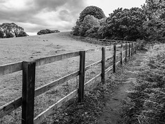 Paths and fences. . . (CWhatPhotos) Tags: cwhatphotos flickr photographs photograph pics pictures pic picture image images foto fotos photography artistic that have which contain near olympus camera micro four thirds omd em1 sigma 16mm f14 prime lens waldridge chester le street woodland fence fenced wood wooden mono monochrome bw black white walk path trees lane