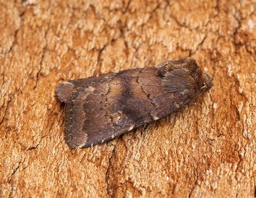 Brown Rustic