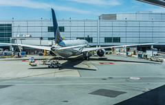 united flight ua 184 in turnaround service for munich (pbo31) Tags: sanfranciscointernational sfo sanmateocounty color airport airline travel aviation bayarea california nikon d810 june 2019 boury pbo31 plane flight boeing 787 united sanbruno terminal gate