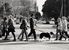 El cruce (carlos_ar2000) Tags: cruce cross calle street gente people urban puertomadero buenosaires argentina