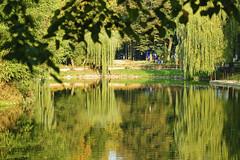 The Pond (nemetz83) Tags: pond park autumn fall season trees sunny willow bridge water surface reflections