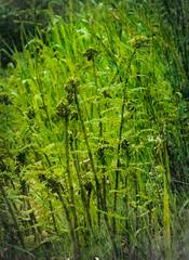 Green (judy dean) Tags: gardens judydean 1835mm scotland 2019 mellerstain