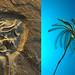 Two Crinoids