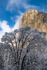 Towering Above (brendatharp) Tags: nopeople northamerica nature snowcovered greetingcard day snow california walldecor national outside wallart valley usa landscape winter vertical yosemitenp outdoor naturephotography seasons scene granite yosemitevalley art fineartprint daytime wild snowy nobody tree wilderness cliff stone