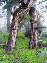 A Mysterious Place called Hawthorndene (Fairy Duff) Tags: gate rusty trees winter mysterious