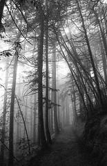 Misty forest (-Alberto_) Tags: redwoods forest fog misty nature california nikonn90s 35mmfilm d76