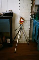 000016980014 (sadjeans) Tags: chinonbellami kodakportra800 digitalcolorimagelab 35mm film tripod