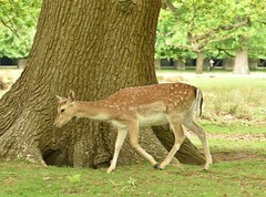Dunham Massey May 19 - 161 (Lostash) Tags: england uk dunhammassey nt nationaltrust