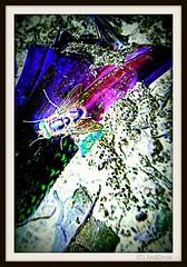 Spur von Pink / Alle Rechte vorbehalten © AndiDroid ;-)   Smile On Saturday!...  #ThinkPink (AndiDroid ;-)) Tags: andidroid foto photo photography photographie animals tier tierphotography natur nature naturephotography naturphotographie digitalart fotomanipulation artdigitalvirtualgallery kreativepeople conceptual explore color colour colours couleurs eigenart ownart smileonsaturday thinkpink