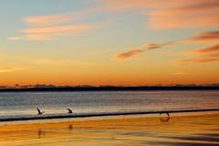 Plum Island sunrise no. 5 (rlonpine) Tags: sunrise coastal newengland massachusetts plumisland rlonpine