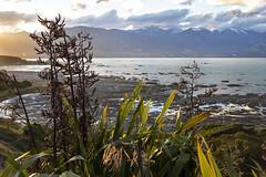 View from Point Kean's Lookout (Greenstone Girl) Tags: earthquakeuplift nzfurseals limestonne sharprockyshorelines kaikoura pointkeanlookout flaz sunset rocks sea mountain