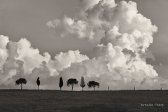 Not Quite a Country Lane Yet (brendatharp) Tags: cypress cumulus fineartprint day clouds daytime scene traveldestination monochrome travel blackandwhite wallart walldecor europe italy nobody billowing umbrellapines trees tree