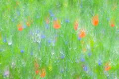 Impressions of a summer meadow. (brendatharp) Tags: motionblur wallart interpretive natureimpressions walldecor wildflowers impressionistic nature flower fineartprint cameramotion meadow summer horizontal vibrantcolors naturephotography season