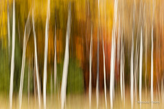All the Colors of the Forest. (brendatharp) Tags: trees walldecor foliage wallart fineartprint nature scenic island autumn woods apostle fall color madelineisland leaves season