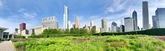 Lurie Garden, Chicago (NettyA) Tags: city usa chicago skyline northamerica millenniumpark luriepark luriegarden