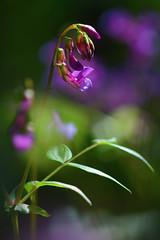 (marussia1205) Tags: лето цветы summer flowers