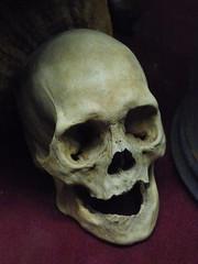 Anyone Seen My False Teeth? (Steve Taylor (Photography)) Tags: toothless skull black brown red cerise eerie spooky smiling odd cloth uk gb england greatbritain unitedkingdom london viktorwyndmuseum