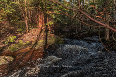 Into the Woods we Go! (superedge519) Tags: forest woods stream water trees brush green rushing